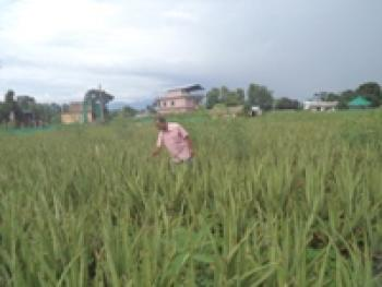 Pribartan Nepal06